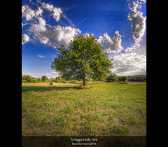 A Happy Little Tree (HDR Vertorama) (farbspiel) Tags: panorama plants green sunshine clouds photoshop germany landscape geotagged photography flora nikon cloudy pflanzen wolken wideangle bluesky blended handheld stitching photomerge tribute grn bobross landschaft stitched dri blauerhimmel deu hdr highdynamicrange hdri blend sonnenschein superwideangle wolkig niceweather 10mm postprocessing badenwrttemberg dynamicrangeincrease ultrawideangle d90 schneswetter photomatix digitalblending tonemapped tonemapping detailenhancer vertorama topazadjust topazdenoise klausherrmann topazsoftware sigma1020mmf35exdchsm stuttgartbsnau topazphotoshopbundle geo:lat=4874543644 geo:lon=909031749