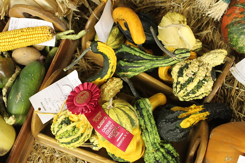 Chowan County Fair - Gourds