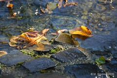 Golden Leaves (mbrodrick) Tags: autumn light summer sun water leaves yellow golden licht pavement sommer laub herbst gelb rays sonne bltter pflaster strahlen wassere