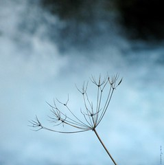 carpe diem (overthemoon) Tags: blue autumn plant square schweiz switzerland waterfall suisse fribourg svizzera cascade picnik gruyère jaun ombellifère monthlymosaic bofwinner bestofr imagepoésie umbelliferous