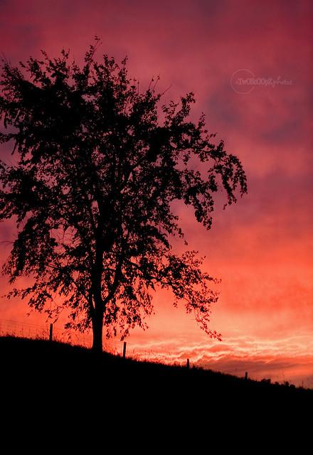 Autumn Sunset 277/365