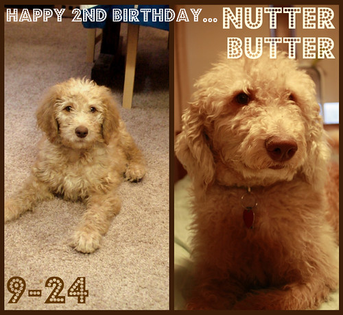 nutter butter 2yrs