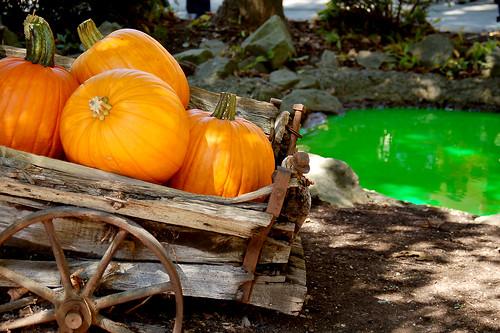 Hallowboo 2010: Pumpkins.