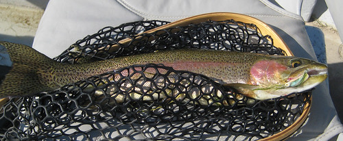 Bow on White Zonker 4Oct10-Bighorn