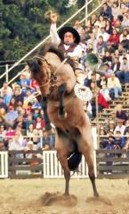 El rosillo (Eduardo Amorim) Tags: horses horse southamerica caballo uruguay cheval caballos cavalos prado montevideo pferde cavalli cavallo cavalo gauchos pferd hest hevonen chevaux gaucho  amricadosul montevidu hst uruguai gacho  amriquedusud  gachos  sudamrica suramrica amricadelsur  sdamerika jineteada   americadelsud gineteada  americameridionale semanacriolla semanacriolladelprado eduardoamorim iayayam yamaiay semanacriolladelprado2010