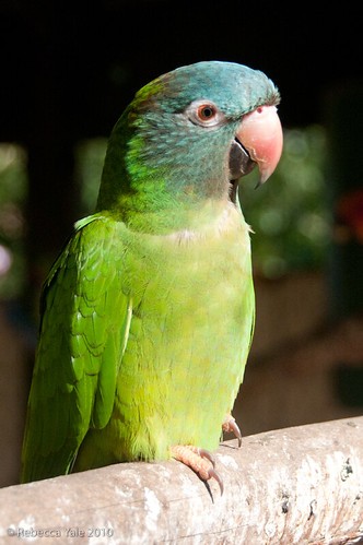 RYALE_African_Dawn_Birds_32