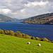 Loch Tay_10