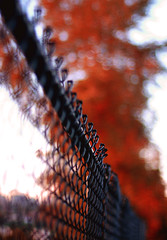 """""""Autumn burned brightly, a running flame through the mountains, a torch flung to the trees."""" Faith Baldwin (ewitsoe) Tags: seattle city red tree fall leaves fence washington nikon dof bokeh pacificnorthwest wa pnw aurumn hff d80 happyfencefriday"""