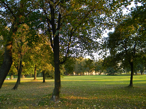 kalemegdan,beograd,park,nature,belgrade,trees,parks,city park,nature in city,green