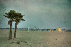 DOS PALMERAS EN LA PLAYA (ABUELA PINOCHO ) Tags: espaa textura spain arboles playa palmeras dos castellon caseta sombrillas burriana
