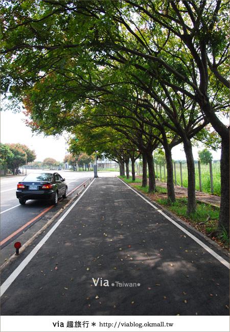 【台中】台灣秋天最美的街道!台中大坑發現美麗的台灣欒樹18