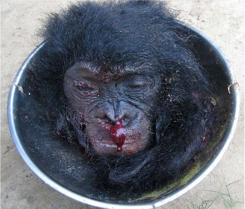 bonobo on platter