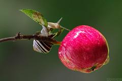 Autumn Charmer (Vie Lipowski) Tags: nature fruit wildlife