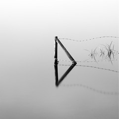 The end of captivity (Fly bye!) Tags: lake reed water fence reeds post barbedwire mere marbury bigmere