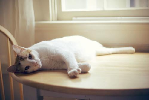 [フリー画像] 動物, 哺乳類, ネコ科, 猫・ネコ, 201101011100
