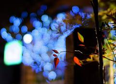 2120/1809*'^+z# (june1777) Tags: street light 3 night 35mm dof bokeh sony cosina voigtlander vivid snap 1600 e seoul nokton f12 nex angukdong nex3