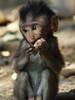 Tiny monkey - Bali (bemuze) Tags: bali holiday indonesia monkey olympus 70300mm ubud monkeyforest mywinners e620 bestofmywinners blinkagain
