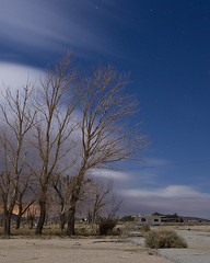Bent Willows (Lost America) Tags: trees night clouds desert fullmoon timeexposure mojave willows nocturnes northedwards