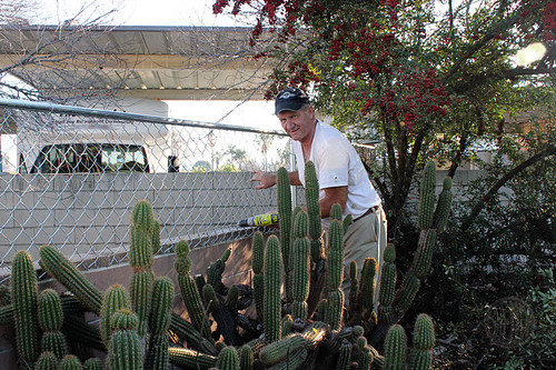cactus makes fencing tricky