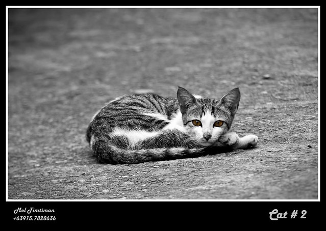 Not a ROADKILL.  Just another cat on the road