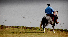 Num tordilho-negro... (Eduardo Amorim) Tags: brazil horses horse southamerica field gua brasil criollo caballo cheval atardecer caballos agua dam barragem campo cavalos pelotas damm pferde cavalli cavallo cavalo gauchos pferd riograndedosul barrage pampa poniente champ anoitecer hest aguada hevonen campanha brsil chevaux gaucho entardecer crepsculo  amricadosul aude poente diga hst gacho  amriquedusud  gachos  sudamrica suramrica amricadelsur  sdamerika crioulo caballoscriollos criollos  costadoce americadelsud  crioulos cavalocrioulo americameridionale caballocriollo auffangen eduardoamorim cavaloscrioulos iayayam yamaiay