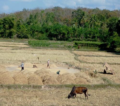 Yangon-Mawlamyine (74)