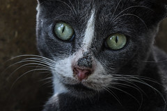 GREECE-CATS (X-Andra) Tags: artaki babies cat cats chalkida euboea feline greece greek heat heatwave pet puppy stray