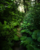 170627-path-trail-forest-vegetation.jpg (r.nial.bradshaw) Tags: path pathway forest vegetation d5 nikon 2470mm28 macrofilter distortion rnialbradshaw stockphoto royaltyfree attributionlicense creativecommons green lush