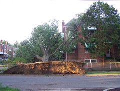 Downed tree, 3rd and Oglethorpe St. NW