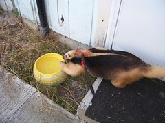 Passing the water dish