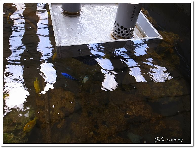 金車鮮蝦 (7)