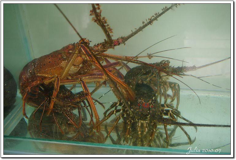 金車鮮蝦 (19)