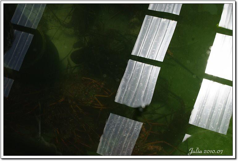 金車鮮蝦 (16)