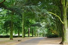 20090924-03_Tree Lined Path-Coventry War Memorial Park (gary.hadden) Tags: uk trees england green bench landscape coventry warmemorialpark earlsdon tothehills garyhadden