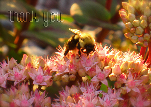 Sedum & Bee notecard