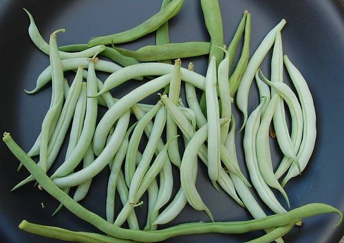 ice crystal wax beans