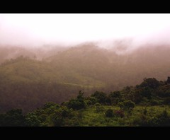 silent valley ....a walk in the clouds... (feroze kaliyadan) Tags: mist kerala monsoon silentvalley canon450d