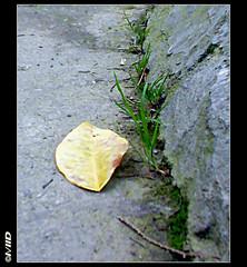 Kicked out (©I\/IID) Tags: green grass yellow leaf alone sad tombstone 2009 gonewiththewind زندگي مرگ سبز قبرستان تنها زرد kickedout 1388 lifevsdeath مازندران علف ساري hopevsfear برگ غمگين andnomore بربادرفته قبرستانمولامجدالدين سنگمزار بيمواميد كلوختيپاخورده وديگرهيچ sarimazandaraniran mowlamajduddincemetery