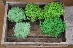 Herbs, Petersham Nurseries (Peter Cook UK) Tags: herbs petershamnurseries