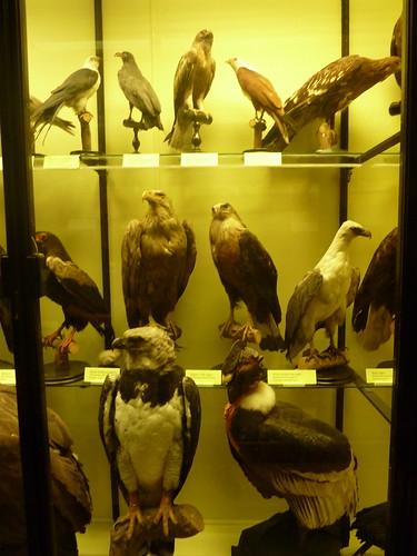 Hella Hawks