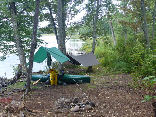 Tarp and hammock