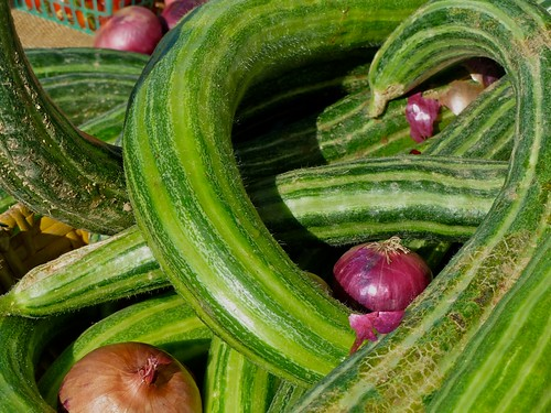 "Armenian cucumber also known as  ""snake cucumber"" or ""snake melon"""