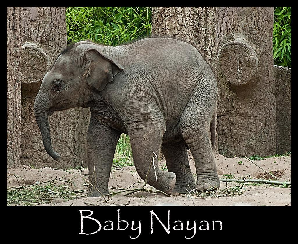 Baby Nayan