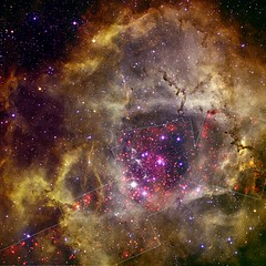 Rosette Nebula (NASA, Chandra, 09/08/10) [EXPLORED] (NASA's Marshall Space Flight Center) Tags: star cluster nasa astronomy chandra kittpeaknationalobservatory ngc2237 rosettenebula xraytelescope digitizedskysurvey chandraxrayobservatory