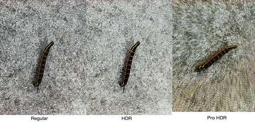 compare3-worms