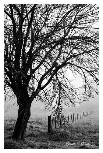 Niebla en Cañuelas