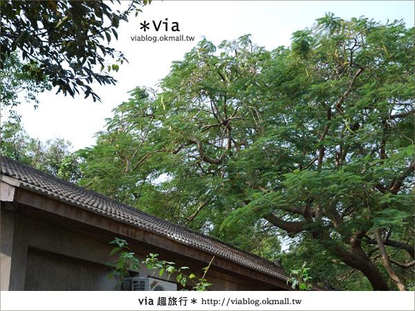 【彰化】彰化藝術高中~教室與森林結合的美麗校區10