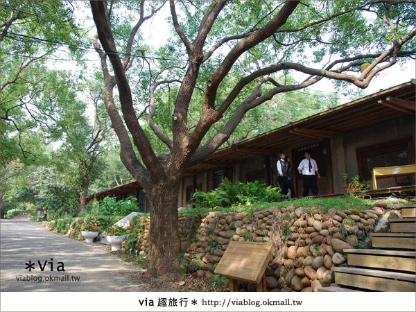 【彰化】彰化藝術高中~教室與森林結合的美麗校區18
