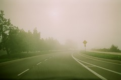 day two-hundred-forty-six. (fivefortyfive) Tags: school trees white lines fog drive driving crossing deer pinkish fivefortyfive 246365 thanksfor30kviews maggieannre