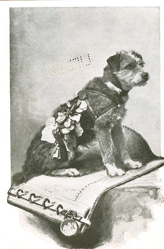 Owney, the Postal Mascot
